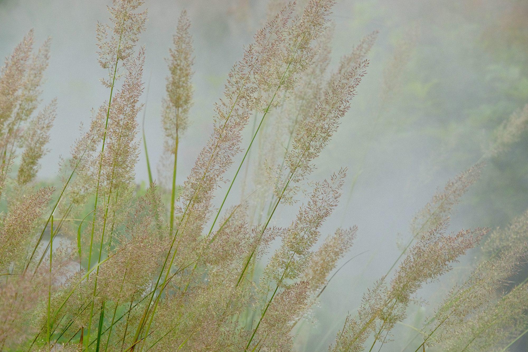 Herbstliche Gräser